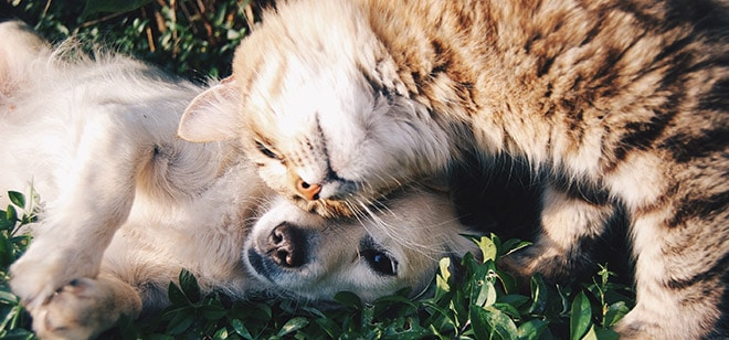 Knuffelende hond en kat