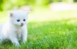 medische kosten katten verzekering